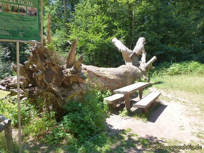 Schusterpfad 091