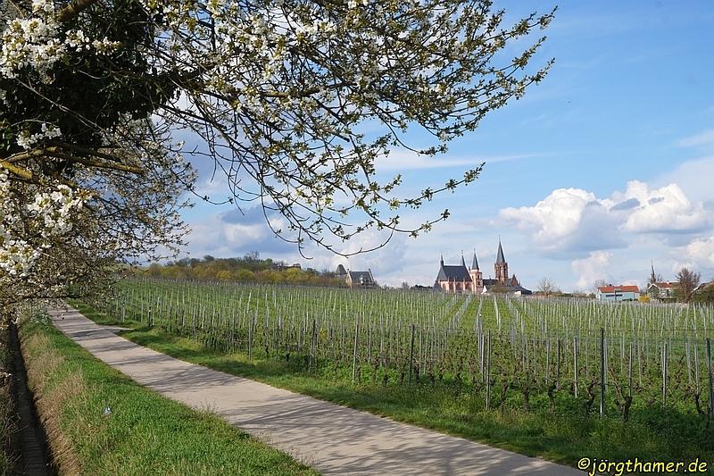 Die Skyline von Oppenheim