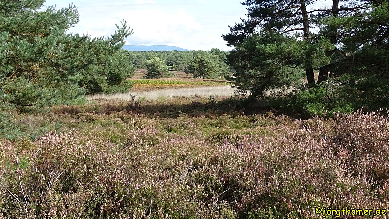 Die Mehlinger Heide ist die größte Heide Süddeutschlands